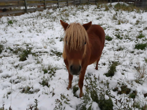 Shaggy the mini horse!!!