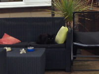 Missing Small All-Black Female Cat - Coombe Ave area - answers to Lolly