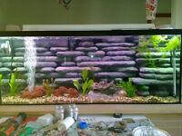 Large Aquarium 120 gallon
