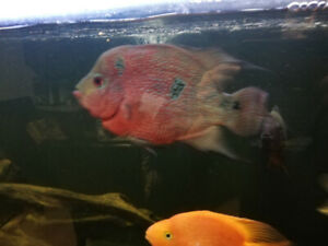 Fish for sale!