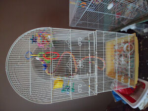 2 budgies for sale.