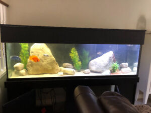135 gallon fish tank, fully functional with wet/dry filter syste