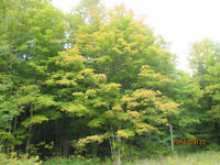 26 Acre Hardwood Lot. 15 min. to Owen Sound. 10 Min. to Wiarton