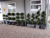 ARTIFICIAL OUTDOOR TREES FOR GARDENS & PATIOS