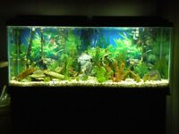 ****Fish aquarium 55 gallon, 30, 25 and 10 gallon aquariums***