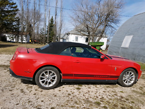 2010 Ford Mustang pony