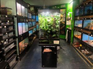 Menagerie Pet Shop Reptiles for Sale
