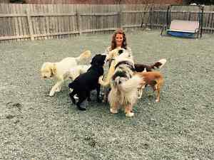 Doggy Daycare and Kennel-Free Boarding Services St. John's Newfoundland image 6