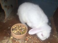 Rabbit free to good home