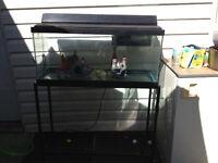30g aquarium
