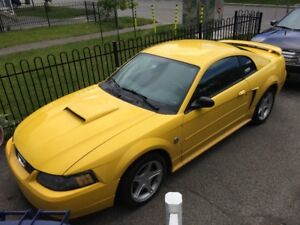 Ford Mustang 2004 40ieme anniversaire