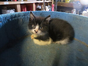 cute kitten ready for new home