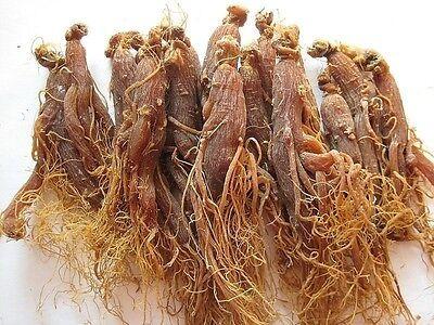 6 years RARE Panax Korean Red Ginseng Root,China, #M1413 QL