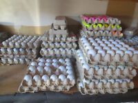 Used Golf Balls - cleaned & sorted