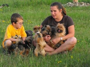 HI DOG SITTER FOR $ 20.00 A DAY Peterborough Peterborough Area image 3