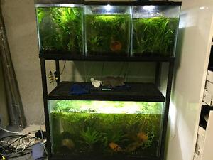 Plusieurs aquariums