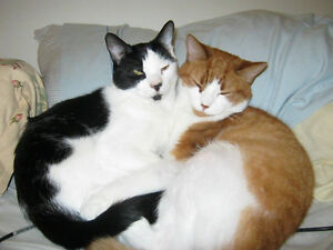 Furever Friends Petsitting Services