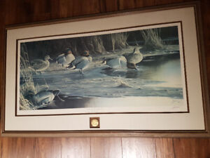 Limited Print by Wilhelm Goebel: Quiet Cove - Greenwing Teal