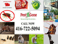 10% OFF-Free Estimate-Expert Pest Removal Service:416-722-5094