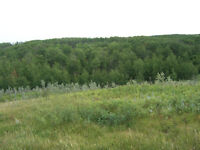 SCENIC ACREAGE TO BUILD YOUR DREAM HOME