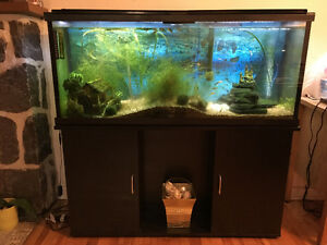 55 gallons aquarium all included