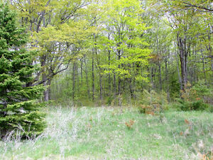 COUNTRY BUILDING LOT - HWY 35, Coboconk. $54,900. Kawartha Lakes Peterborough Area image 5