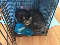 Free Adult Cats to a Good Home