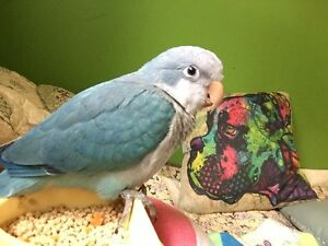 Looking for clean parrot/bird toys! Cornwall Ontario image 1