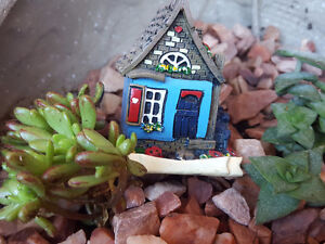 MINIATURES AND SUCCULENTS ON SALE