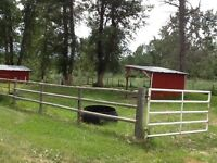 Horse  Boarding in pasture - Millarville