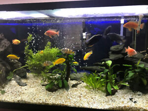 Cichlids, Rocks, Fluval FX4 filter, Lights for aquarium plants