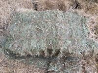 Small Square Bales of Hay. Province Wide Delivery