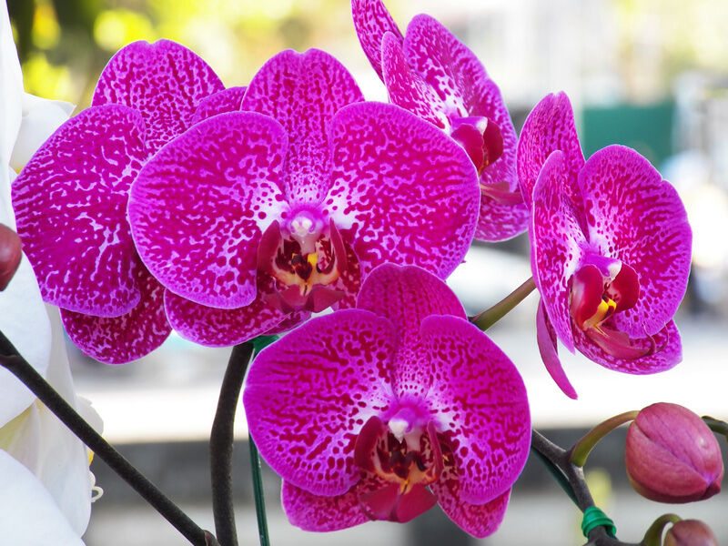 how to raise vanda orchids in glass containers ebay. Black Bedroom Furniture Sets. Home Design Ideas