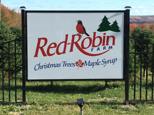 RED-ROBIN CHRISTMAS TREE FARM...OPEN FOR TAGGING/CUTTING