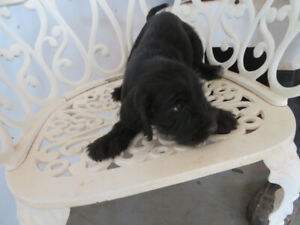 puppies looking for new home