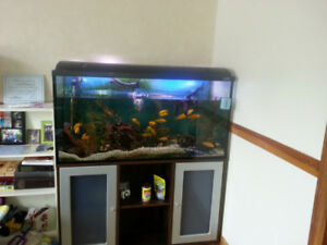 FISH AND TANK FOR SELL