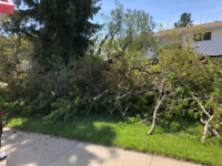 Tree branch removal/wood&fence removal/junk&yard waste removal