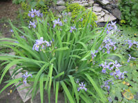 assorted water plants-  Sat. ONLY!  ( 9am until 2 pm )