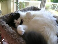 PET& HOUSE SITTING - Caring, Reliable, Experienced - Web Site...