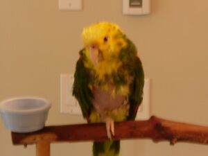 Ideal Parrot Co-Sharer Wanted