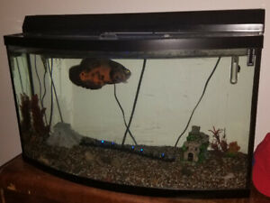 50 gallon bow front aquarium come w/everything even fish $275