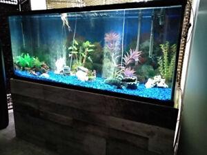 Aquarium 5 pied