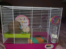 Hamster cage and hamster