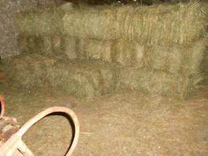Square Hay Bales, mixed grasses/timothy
