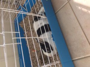 Mini bunny free