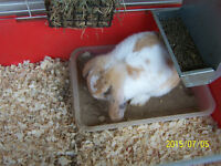 rabbits for sale with cage and accessories
