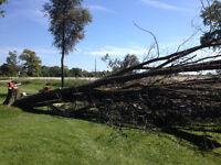 Tree Limbing, Pruning, Trimming, Removal