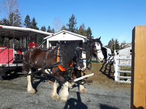 Carriage Company For Sale