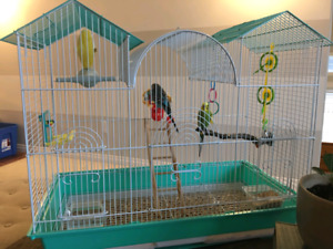 Two Parakeets and supplies