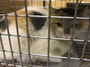 Kitty found at U-haul depot in Gatineau